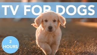 Dog TV: A Day Indoors TV Extravaganza for Dogs!