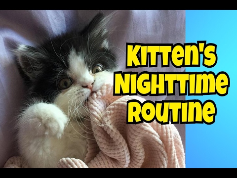 KITTEN'S NIGHTTIME ROUTINE!