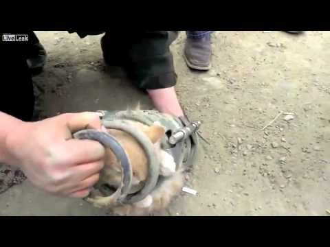 A group of tough guys rescue a trapped kitten from a car spring