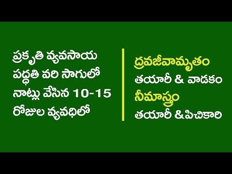 ZBNF Paddy PoP  II 5 - Dravajeevamrutham & Neemastram II RySS&DoAG &Digital Green II A.P.