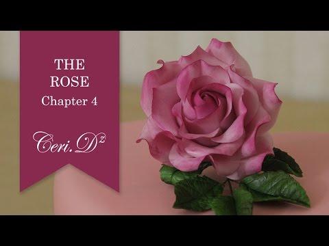 The Rose #4 | Petals 1-4