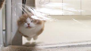 투명벽을 마주한 고양이들의 반응은?ㅋㅋㅋ (Invisible Wall Challenge)