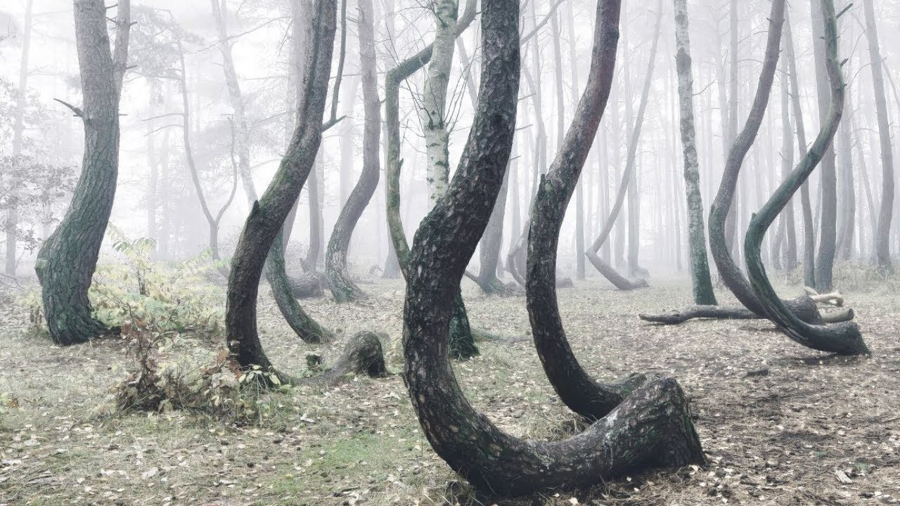 10 Most Unusual Forests In The World