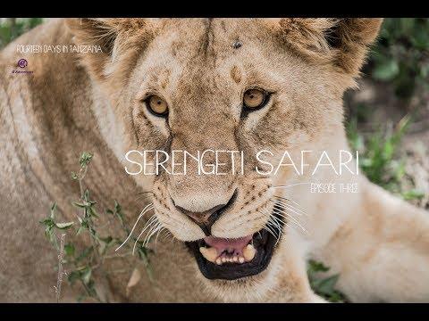 On Safari in Tanzania! The Serengeti Experience