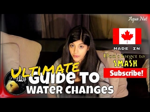 How Much Water Should I Change in my Aquarium 🐟 Fish Tank Water Changes