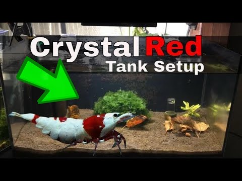 How To Setup An Awesome Crystal Red Shrimp Tank