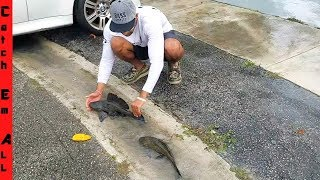 FISH SWIMMING On SIDE-WALK!