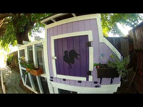 Bay Area Chicken Coop