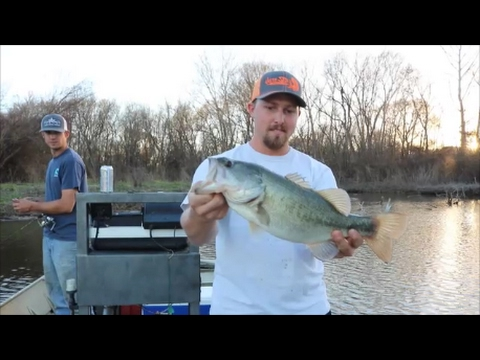 Catching BIG Largemouth While White Bass Fishing The River