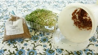 Alfalfa Sprouts Nutrition And Growing Your Own