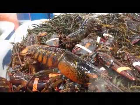 Costco Lobsters Journey