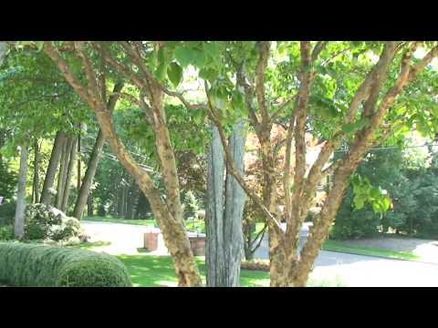 Professional Landscaping in New Jersey | Garden Enhancement NJ - Choose Plants For Your Garden