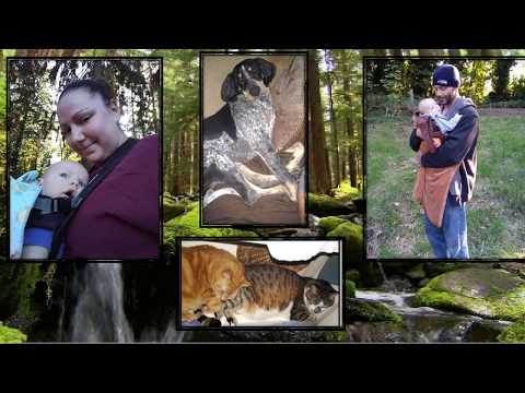3 Family Pets Stolen by Landlord