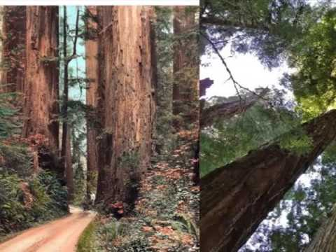 Redwood National Park | Location Picture Gallery |One Of The Most Famous Landmark Of The World