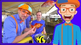Learn About Fish for Children with Blippi | Educational Videos for Kids