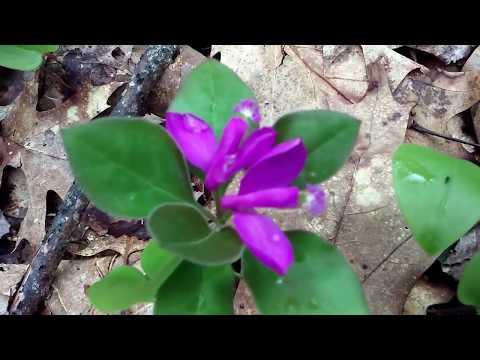 northern woodland wildflower walk
