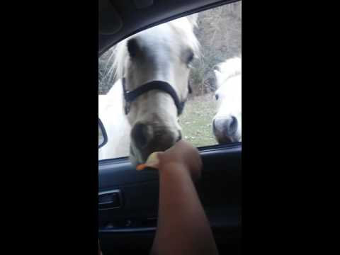 Horse eating chips