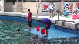 Delfin mutatvany / dolphin stunt