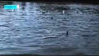 Amazing flying fish ; Fish Dance ; Fish flying all over
