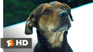 A Dog's Way Home (2018) - The Avalanche Scene (5/10)   Movieclips