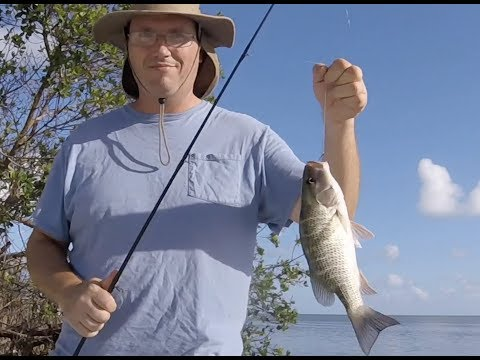 Catching Mangrove Snappers (and a shark!) from the Shore in The Florida Keys