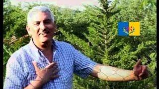 Ammour Abdenour 'L3ID'