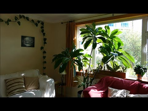 How To Make Your House Into A Jungle