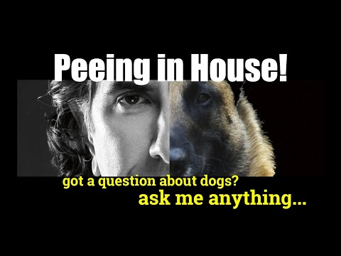 What Can I Do to Correct for Peeing in the House - Dog Training - ask me anything