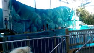 Six flags dolphins