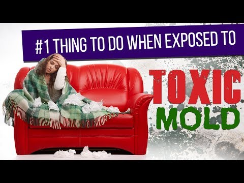#1 Thing to do when Exposed to Toxic Mold
