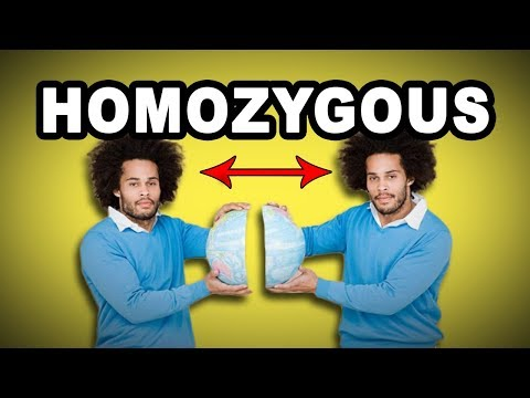 Learn English Words: HOMOZYGOUS - Meaning, Vocabulary with Pictures and Examples