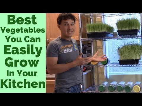 Best Vegetables You Can Easily Grow in Your Kitchen