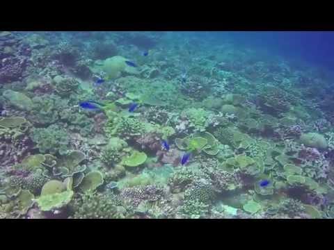 Christmas Island Coral Dream