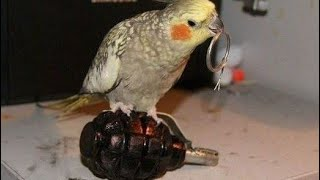You will EXPLODE from laughing - ULTIMATE FUNNY BIRDS COMPILATION