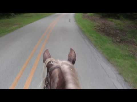 Trying to get away from deer flies and horse flies