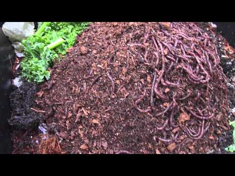 living: worms from Uncle Jim's worm farm