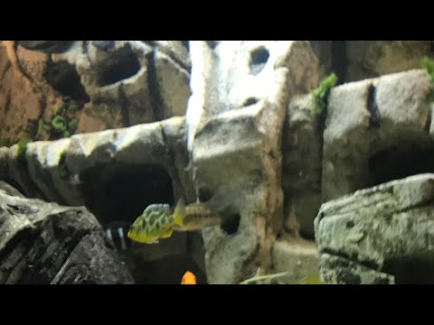 3D background for your aquarium fish tank how to build your own
