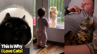 This is why I love cats | Funny Cat Videos 2021