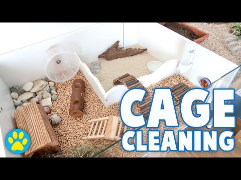 Cleaning & Setting Up Potassium's Hamster Cage