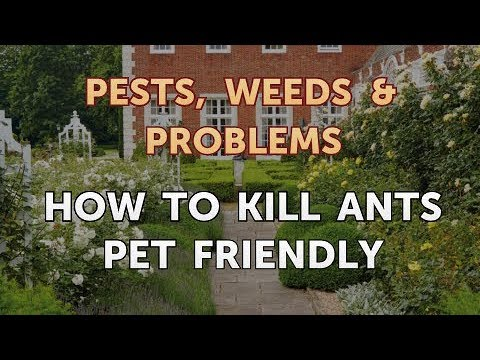 How to Kill Ants Pet Friendly
