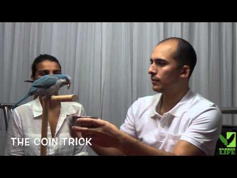 Parrot Life: London the Blue Quaker Parrot showing off some tricks!