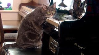Why Do Cats Purr? - Nora - Extraordinary Animals - Series 2 - Earth