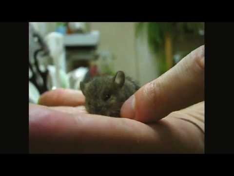 Baby Field Mouse Rescue - Full Video