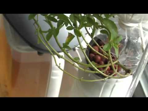 What is Hydroponic Growing | Hydroponics Halifax