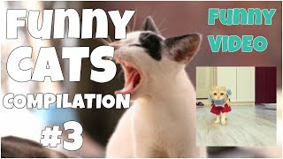 Funny cats compilation # 4 😺 7 second of happiness FUNNY Video 😂