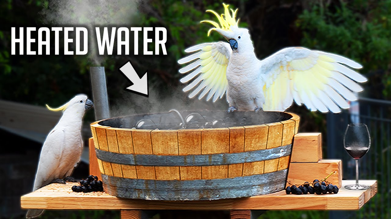 I Made A Hot Tub For Australian Birds!