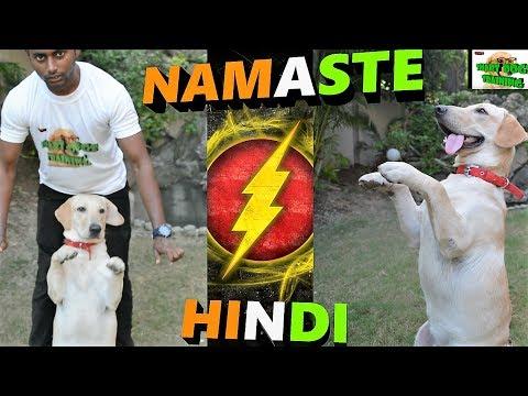 How To Teach Your Dog NAMASTE / SALUTE