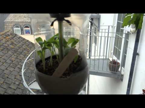 The BIG problem with my hydroponic window garden!