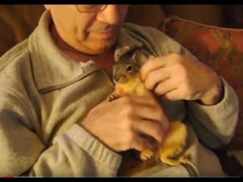 Rocky - Pet Squirrel