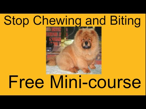 **WOW** Stop Dog Chewing and Digging - Free Mini-course on Stop Dog Chewing and Digging